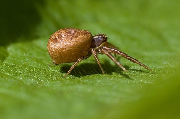 SpiderB2