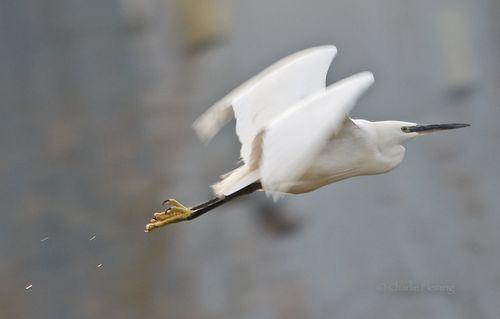 LE in flight