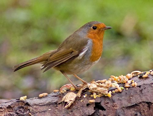 Thursday Robin a