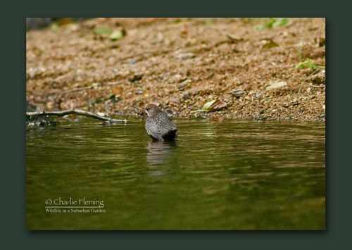 Distant Dipper