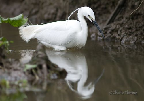 Egret Friday