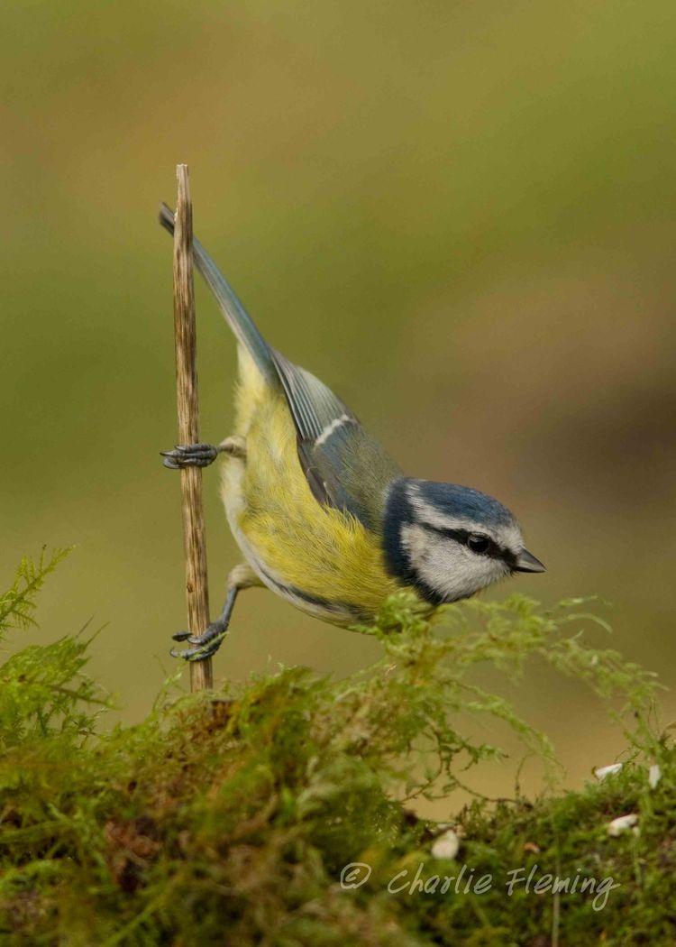 Birdguides