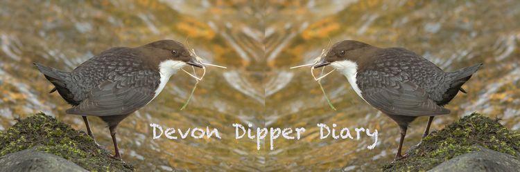 Dev Dip Diary