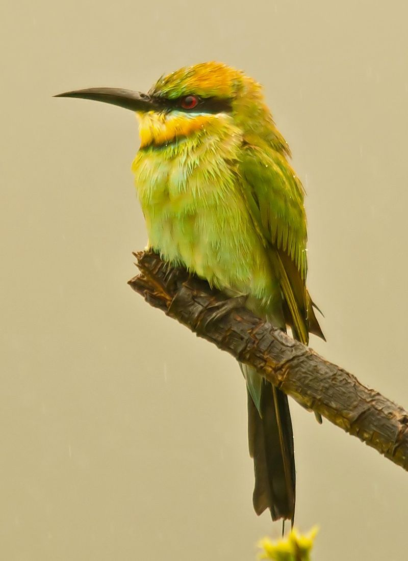 Bee Eater_edited-1a