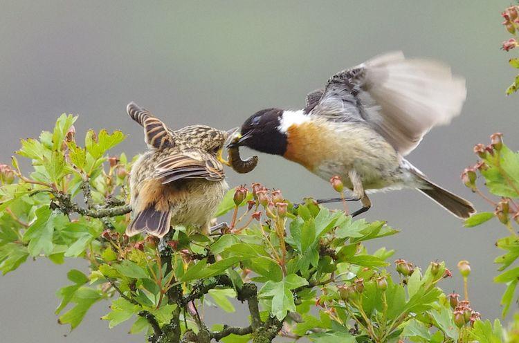 Feeding 2a