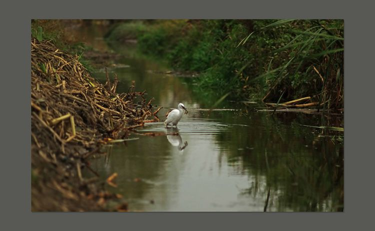 The Brook and Egret