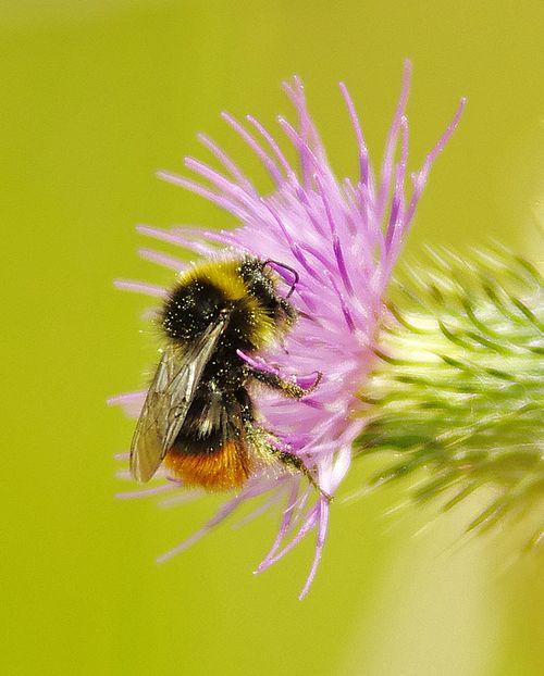 Nice bee