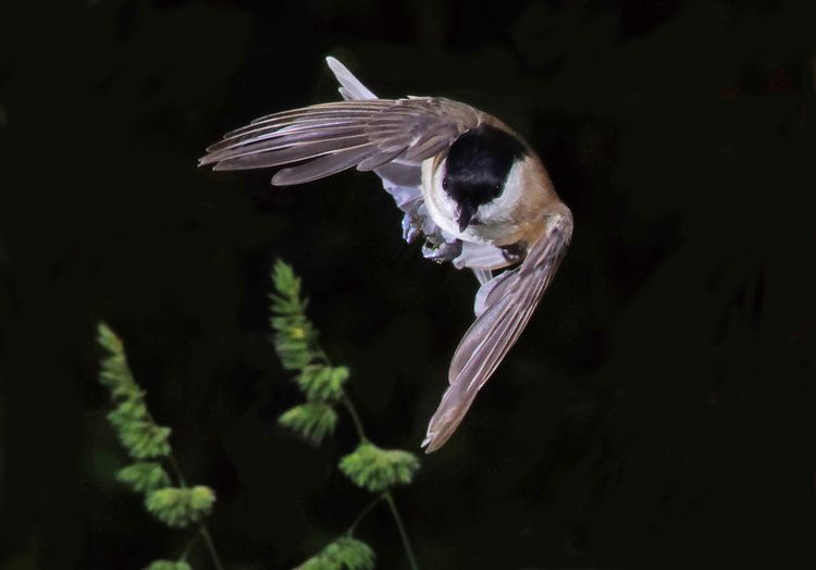 CTit Flies in copy