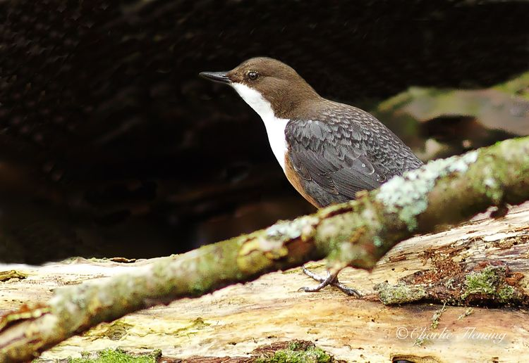 Dipper today