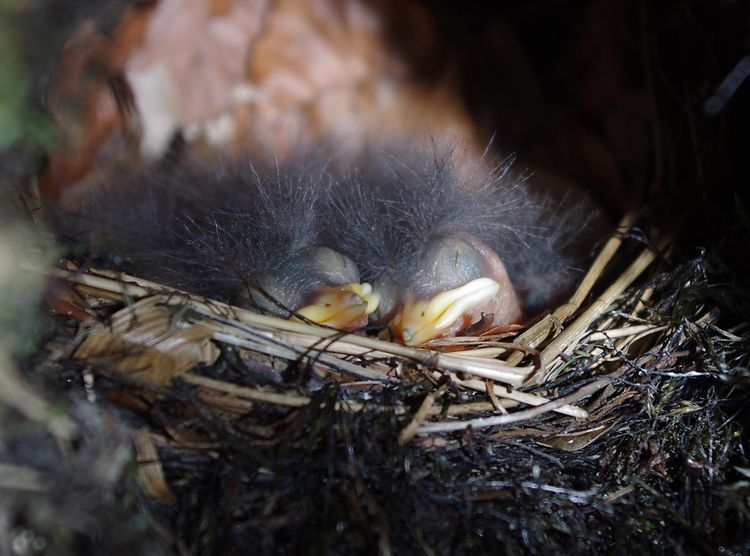 In the nest_edited-1