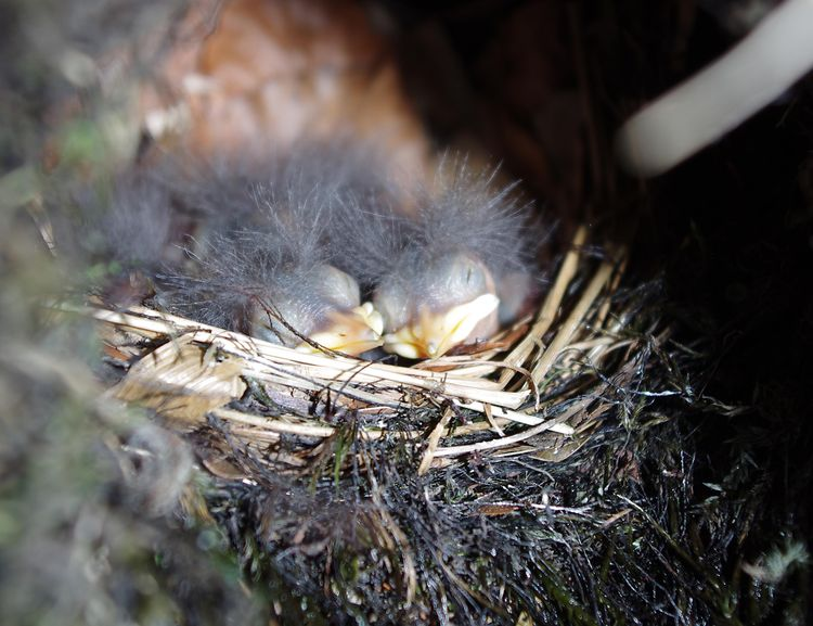 In the nest again