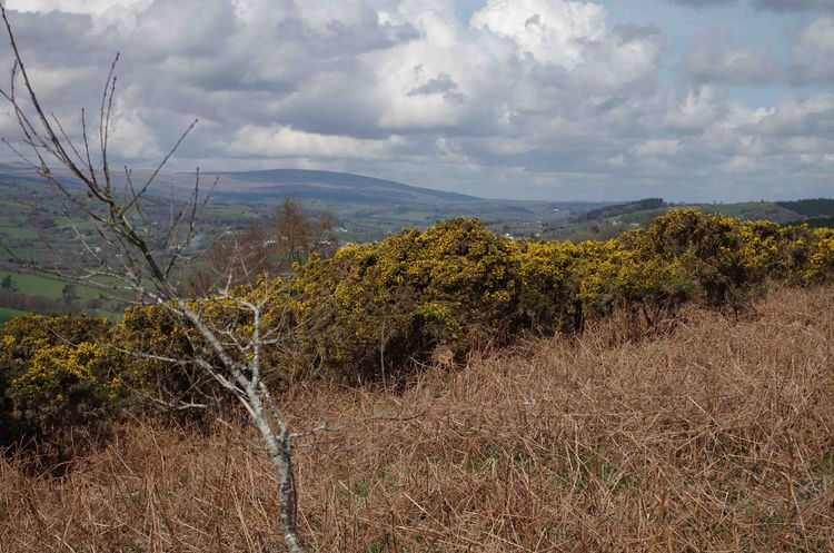 Dartmoor from the hill