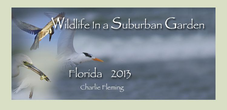 Florida Banner 2013