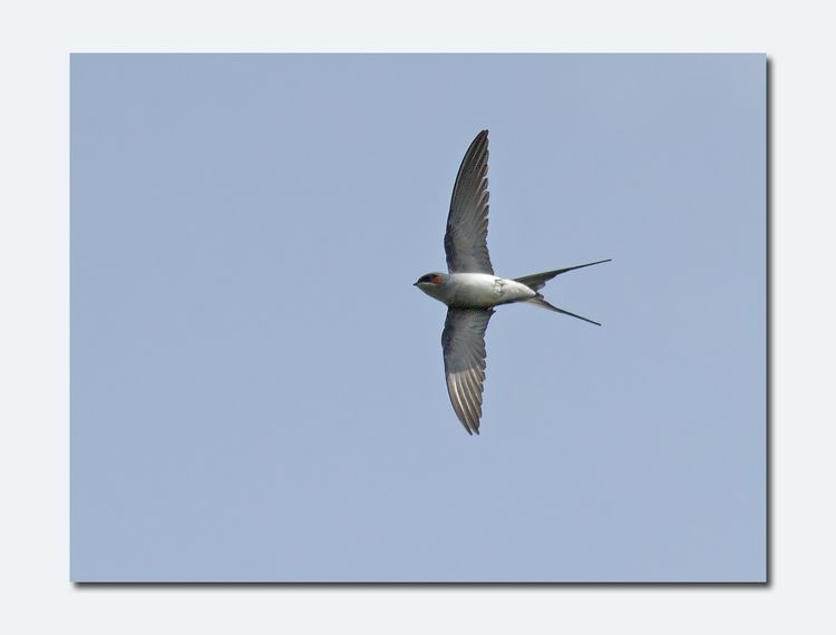 Tree-swift