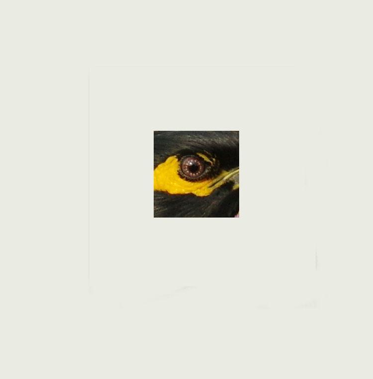 Myna's eye