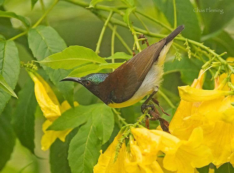 Birdguides-ab