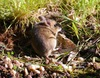 Fieldmouse_march_3rd