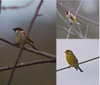 3_birds