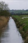 The_marsh