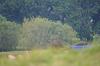 Powderham_osprey_1