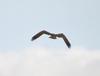Sunday_osprey_2_2